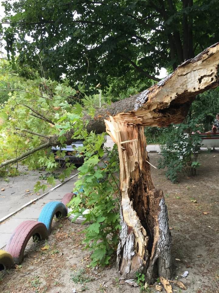 В одном из запорожских дворов дерево упало на автомобиль, - ФОТО, фото-2
