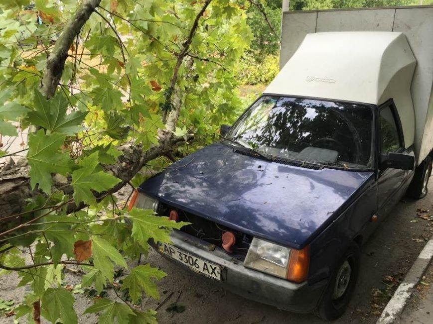 В одном из запорожских дворов дерево упало на автомобиль, - ФОТО, фото-3