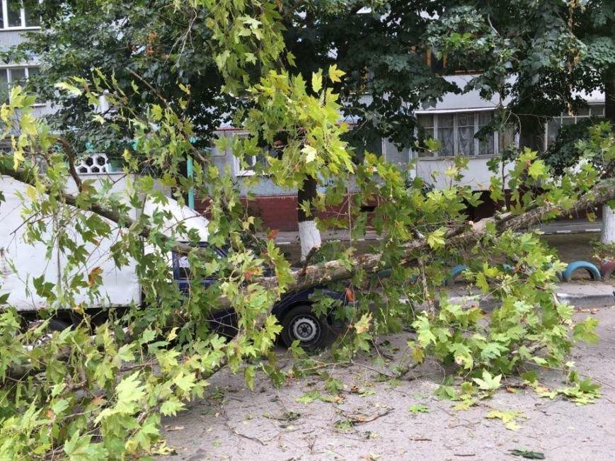 В одном из запорожских дворов дерево упало на автомобиль, - ФОТО, фото-1
