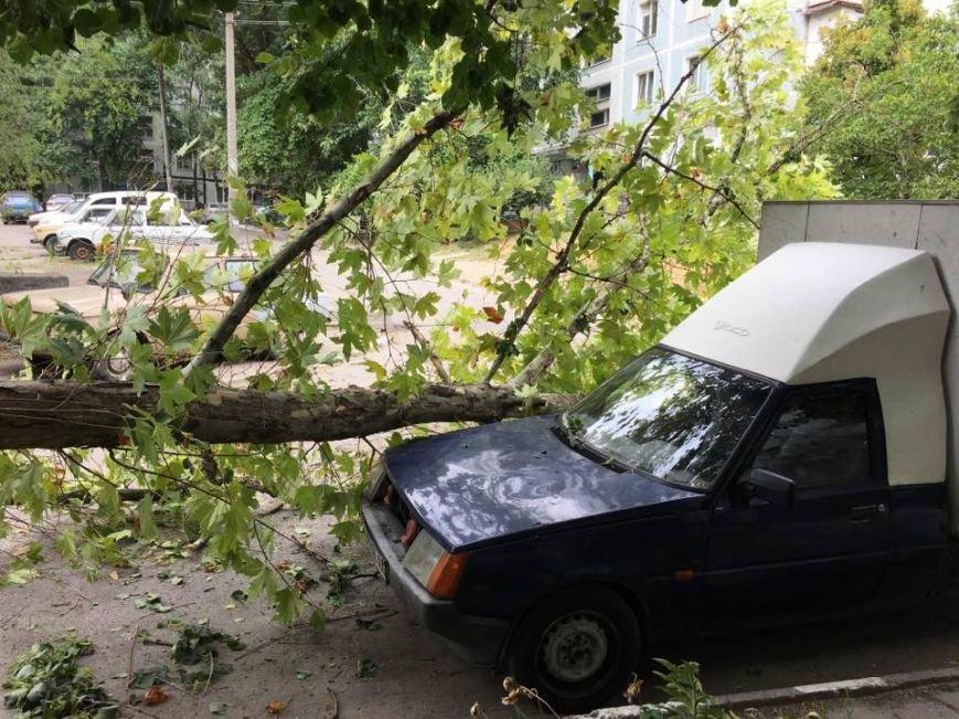 В одном из запорожских дворов дерево упало на автомобиль, - ФОТО, фото-4