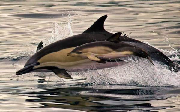 Что общего у дельфинов и людей, фото-6