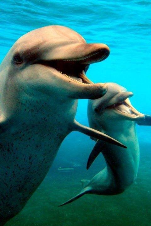 Что общего у дельфинов и людей, фото-2