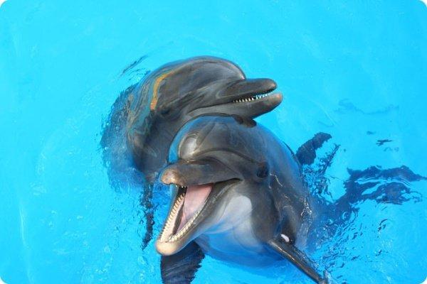 Что общего у дельфинов и людей, фото-1