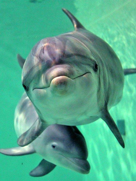 Что общего у дельфинов и людей, фото-5