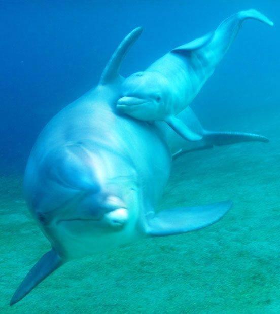 Что общего у дельфинов и людей, фото-3