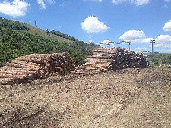 На Львівщині керівники лісгоспів незаконно вирубали лісу на 7 млн.грн. (ФОТО), фото-2