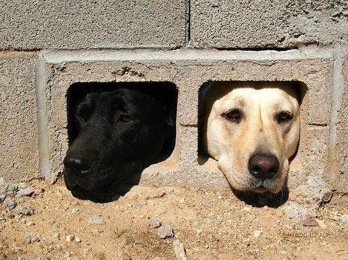 Пёс-Барбос и Фотокросс, фото-7