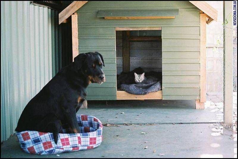 Пёс-Барбос и Фотокросс, фото-4