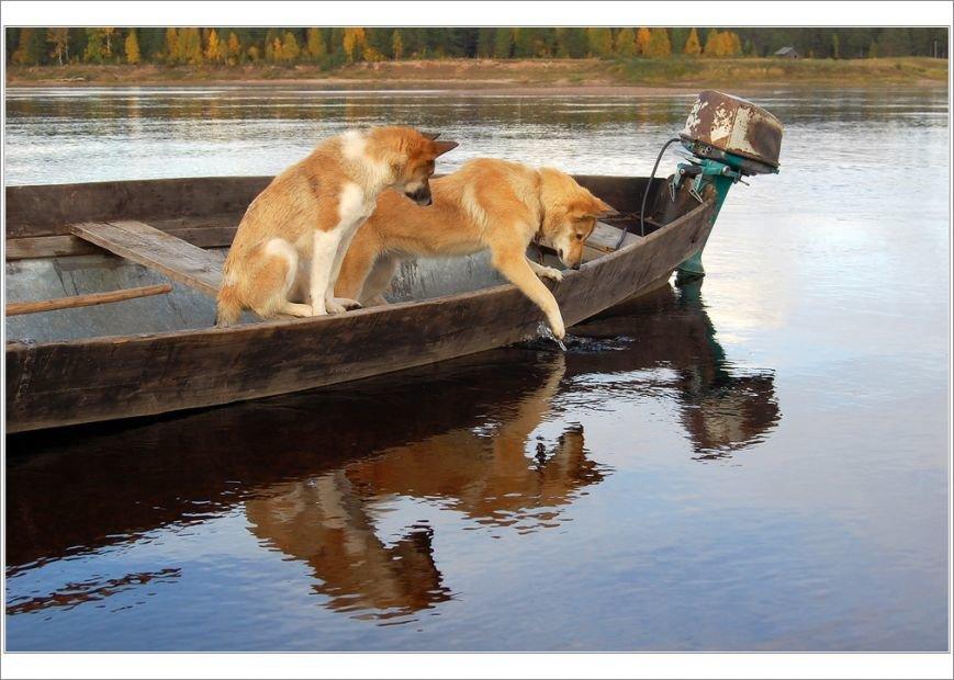Пёс-Барбос и Фотокросс, фото-3