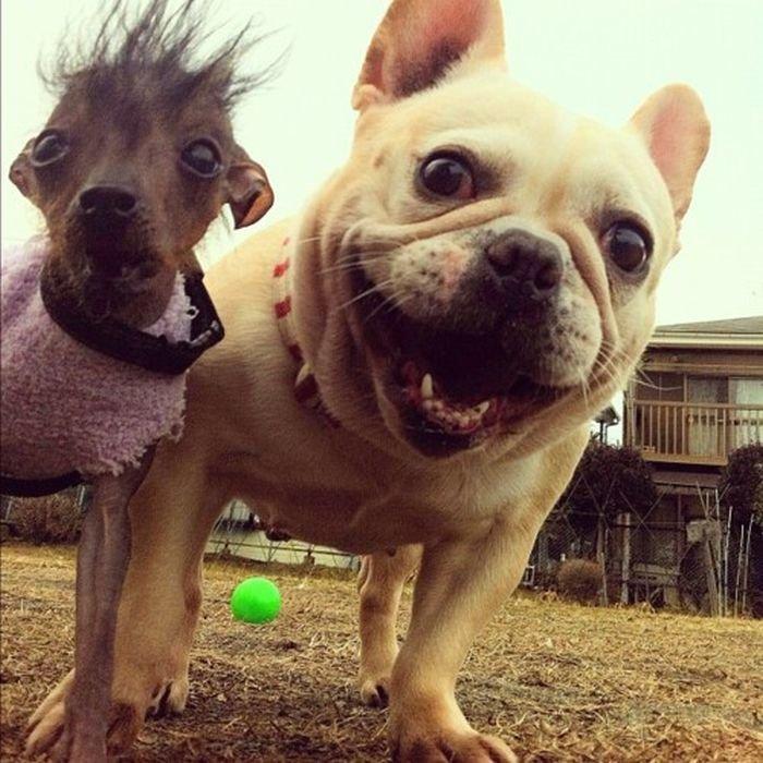 Пёс-Барбос и Фотокросс, фото-8