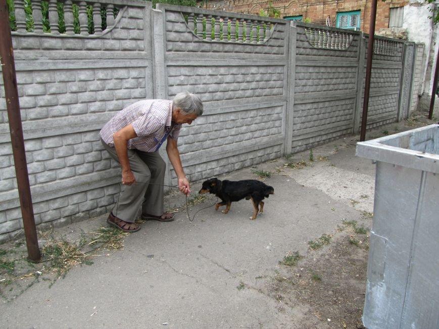 В Мелитополе привязанную дворняжку спасли от жажды, фото-2