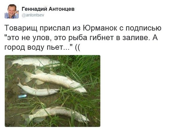 Ульяновск обеспокоен массовой гибелью рыбы в Юрманках, фото-1