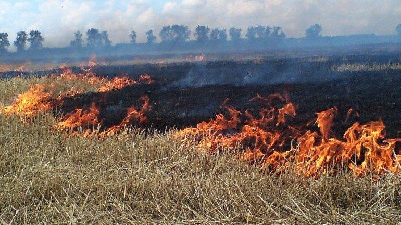 Чрезмерная жара стала причиной увеличения количества пожаров (фото), фото-1