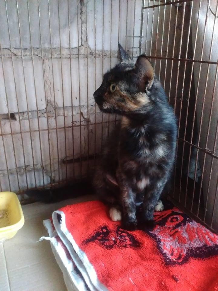 В Запорожье молодая кошка ищет дом, - ФОТО, фото-1