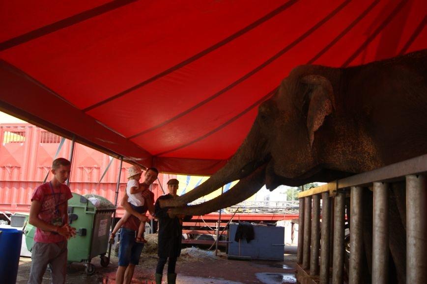 В Одессе в море выкупают двух слоних (ФОТО), фото-1
