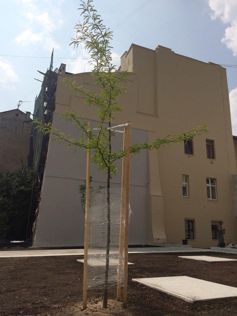 У єврейському кварталі Львова висадили перші дерева (ФОТО), фото-4