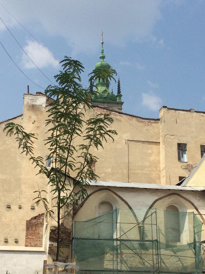 У єврейському кварталі Львова висадили перші дерева (ФОТО), фото-3