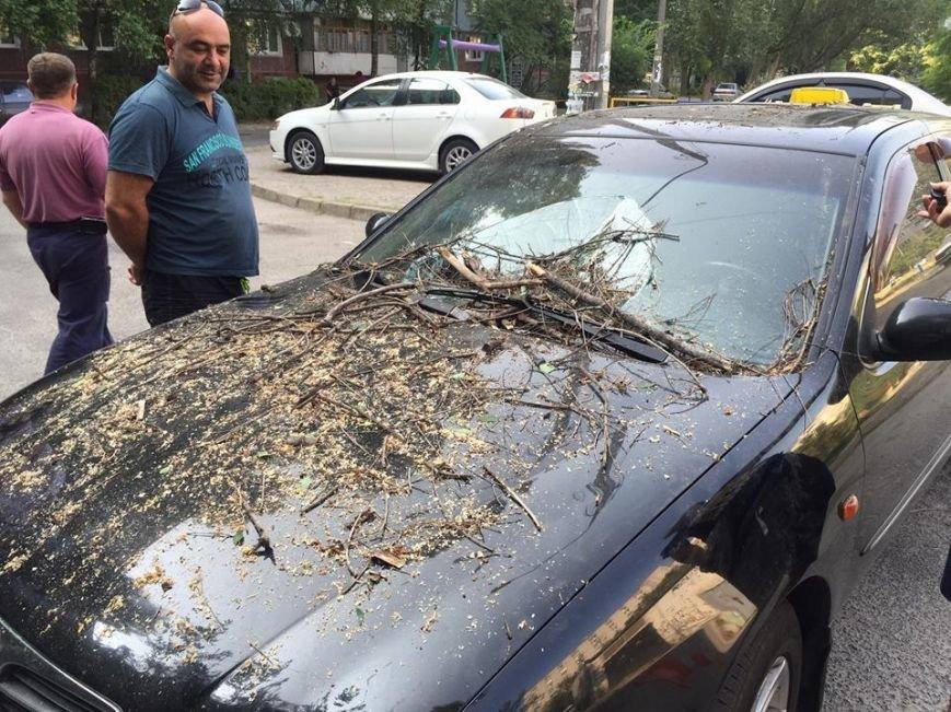 В Запорожье дерево упало на припаркованные у дома автомобили (ФОТО), фото-5