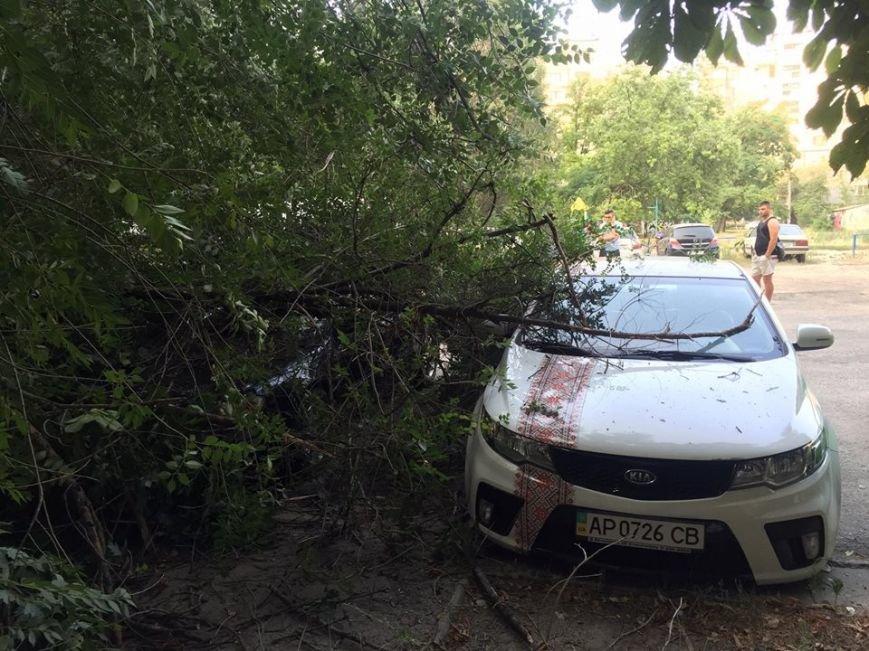 В Запорожье дерево упало на припаркованные у дома автомобили (ФОТО), фото-1