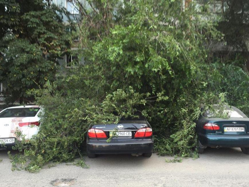 В Запорожье дерево упало на припаркованные у дома автомобили (ФОТО), фото-4