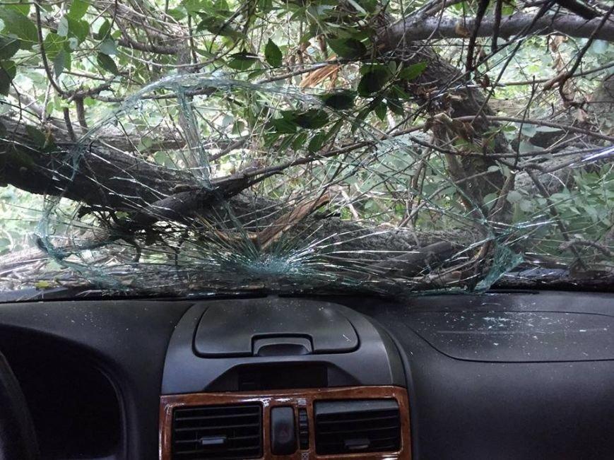 В Запорожье дерево упало на припаркованные у дома автомобили (ФОТО), фото-2