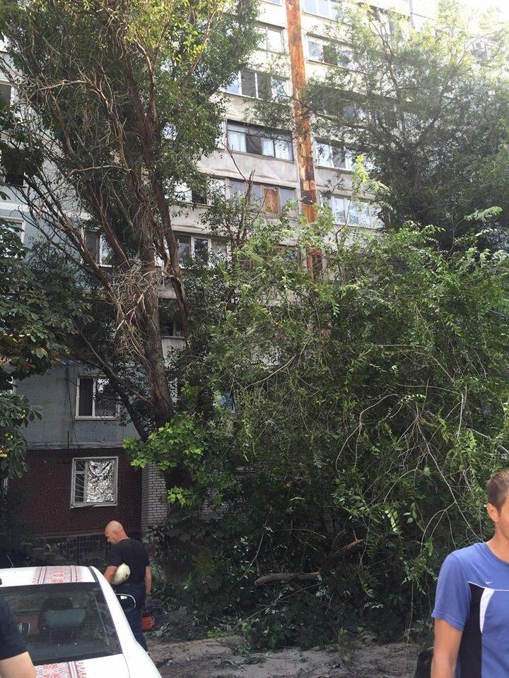 В Запорожье дерево упало на припаркованные у дома автомобили (ФОТО), фото-3