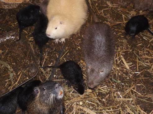 В СИЗО Бахмута осужденные ухаживают за животными, фото-2