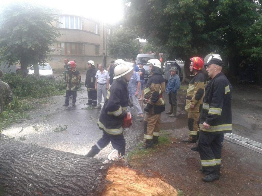 В Ужгороді черговий деревопад: фото, фото-1