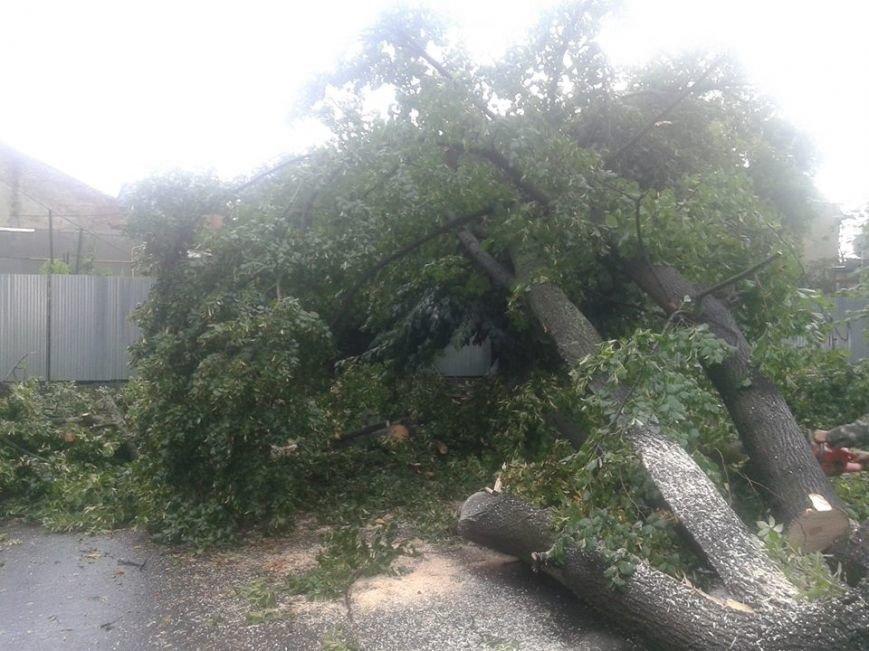 В Ужгороді черговий деревопад: фото, фото-2