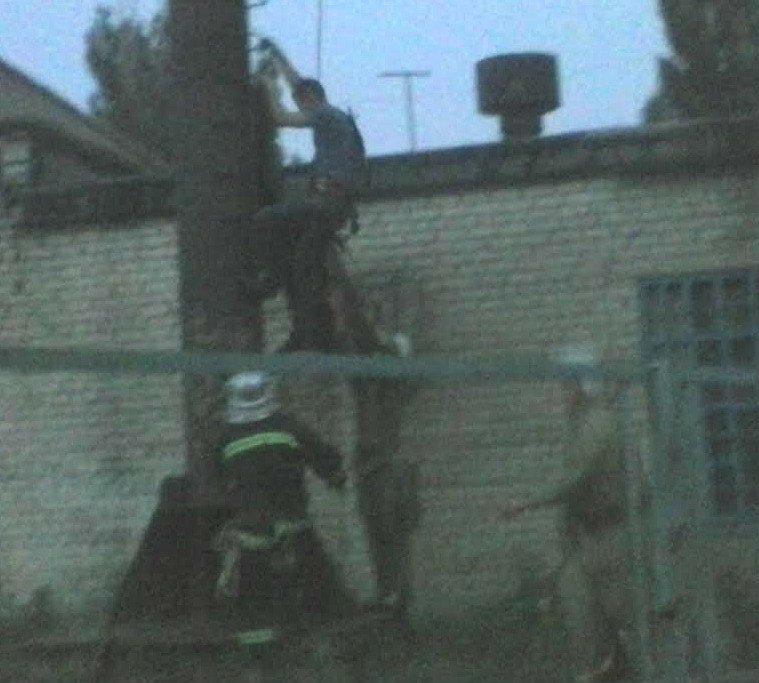В Павлограде альпинисты снимали с трубы экстремала, фото-1