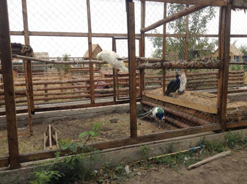 В Мариуполе хозяину зоопарка дали землю под озеленение (ФОТО, ВИДЕО), фото-3