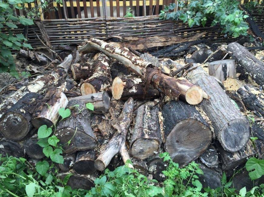 Спиленное в саду Шевченко дерево: преступление или вынужденная мера (ФОТО), фото-3