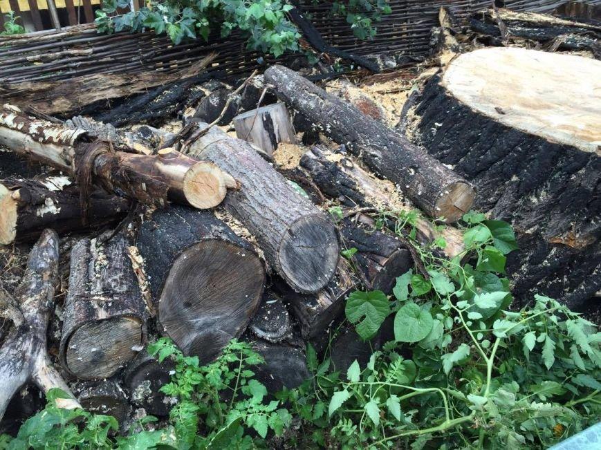 Спиленное в саду Шевченко дерево: преступление или вынужденная мера (ФОТО), фото-5
