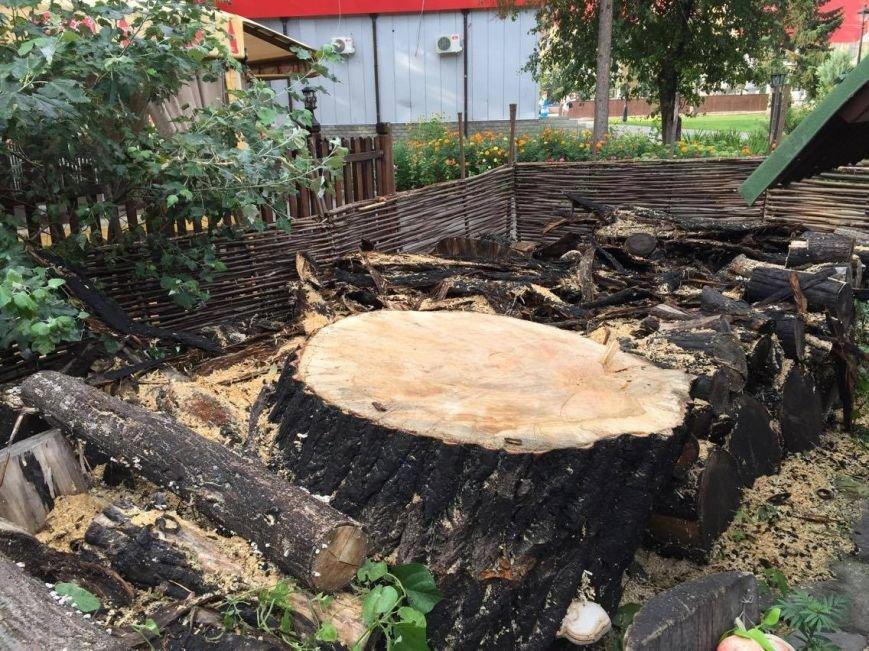 Спиленное в саду Шевченко дерево: преступление или вынужденная мера (ФОТО), фото-2