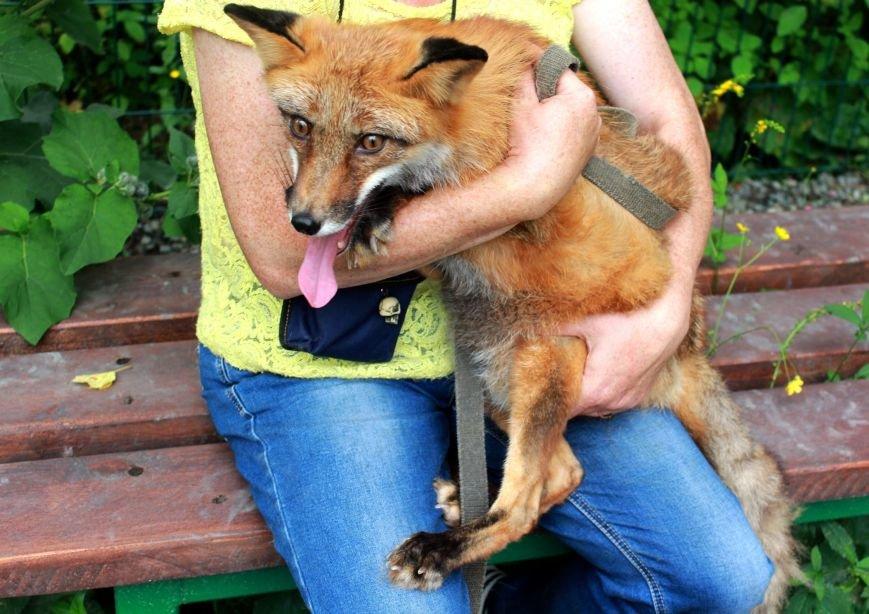 Неравнодушные жители Сахалина приняли участие в волонтерской акции «Помощь животным», фото-1