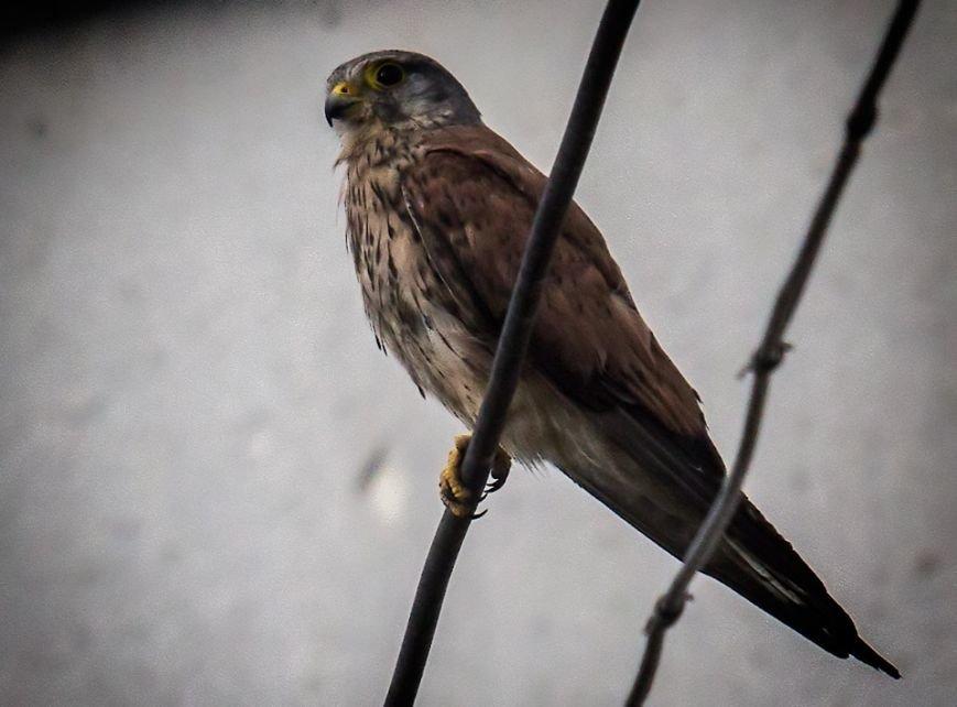 В Ужгороді сімейство диких птахів дало потомство: фото, фото-2