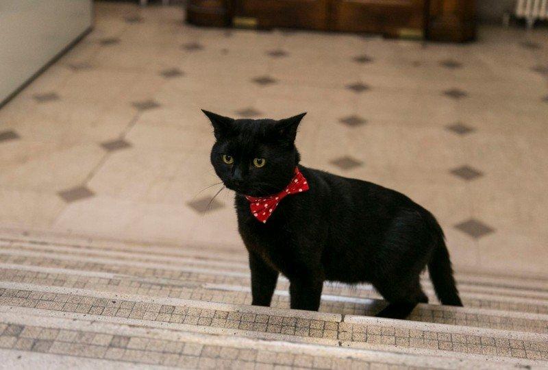 Курйози тижня: «Екзорцист» Шуфрич, карма Єфремова, від кутюр збірної Росії і кіт для Гройсмана, фото-4