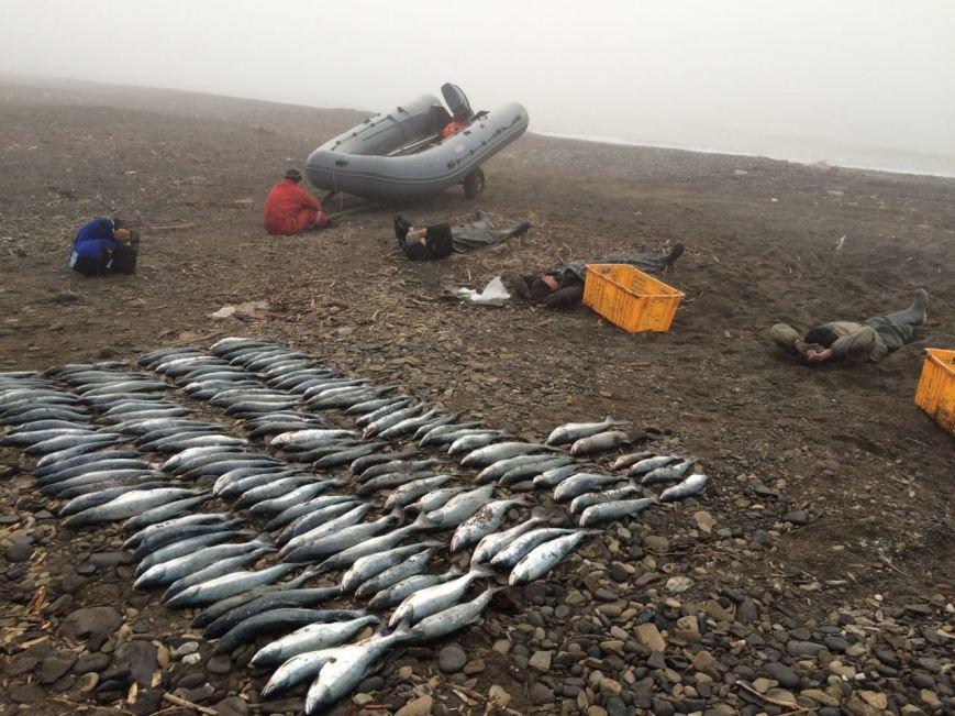 На Сахалине в очередной раз столкнулись с фактом незаконной выемки биологических ресурсов, фото-1