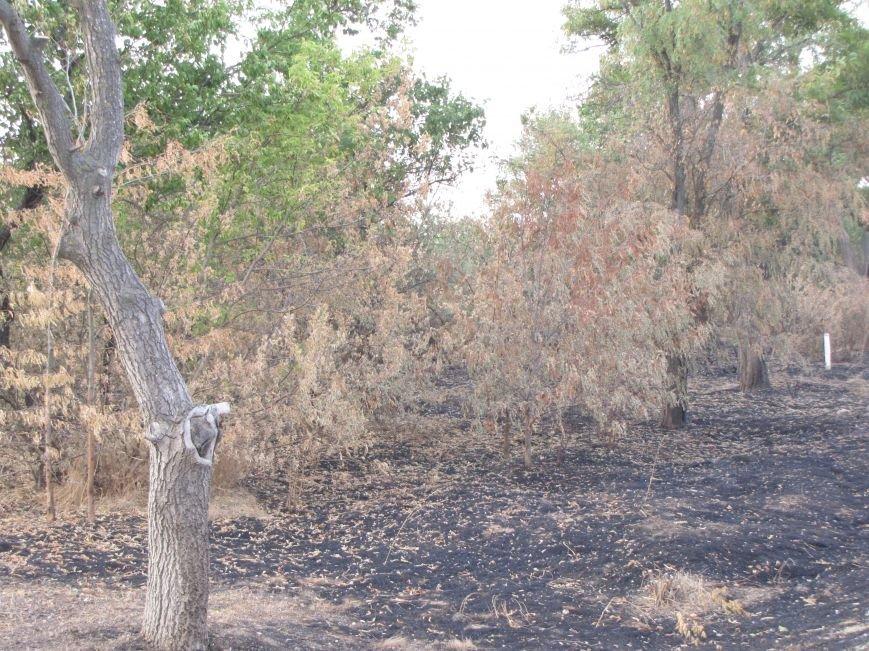 Массовые очаги пожаров в Мелитопольском районе, фото-3