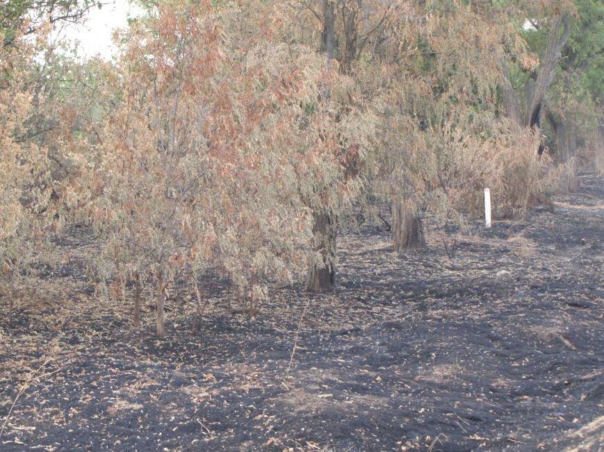 Массовые очаги пожаров в Мелитопольском районе, фото-2