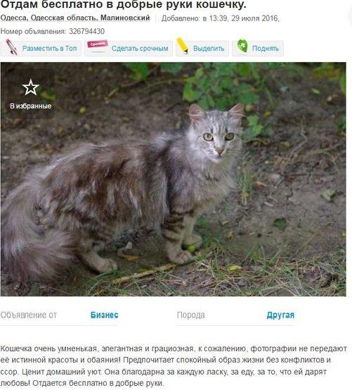 Подборка вещей, которые можно получить бесплатно в Одессе, фото-1