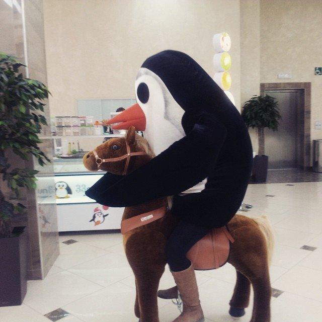 пингвин скачет