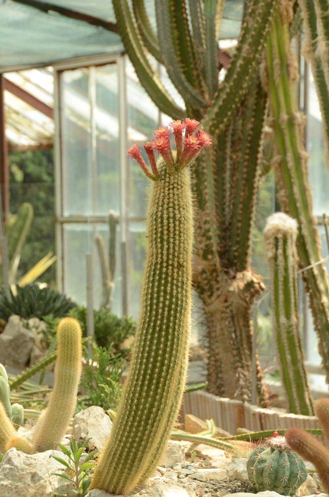 Кактусовой оранжерее Никитского сада – 20 лет, фото-4
