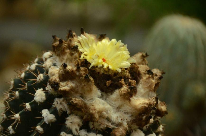 Кактусовой оранжерее Никитского сада – 20 лет, фото-1