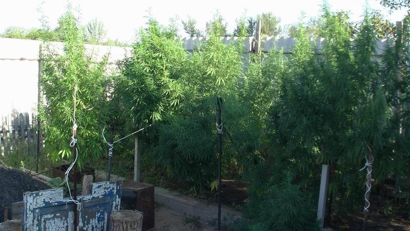 В Славянском районе арестовали наркоагрария, фото-1