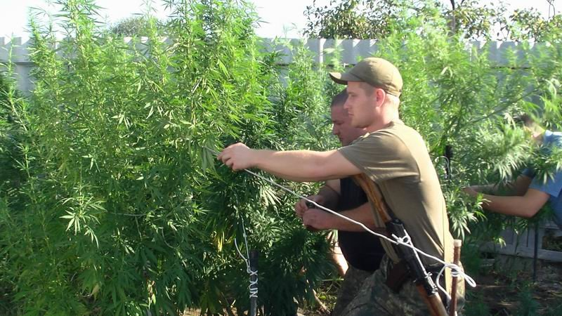 В Славянском районе арестовали наркоагрария, фото-7