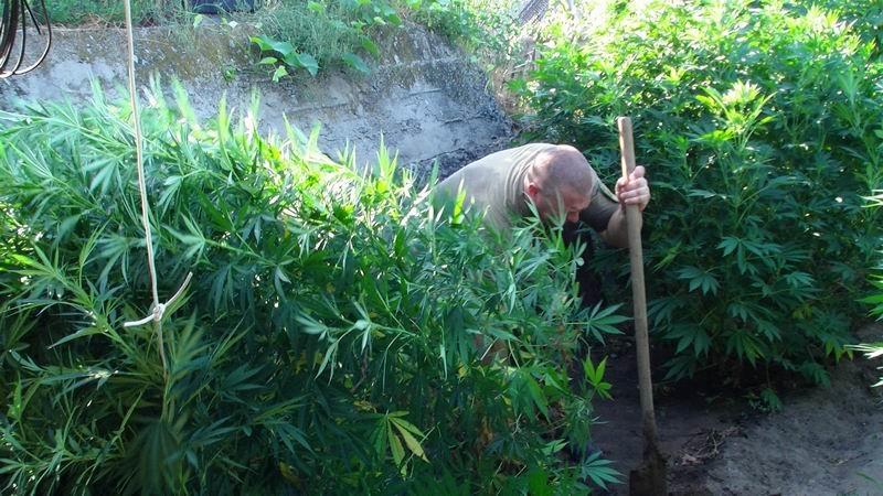В Славянском районе арестовали наркоагрария, фото-8
