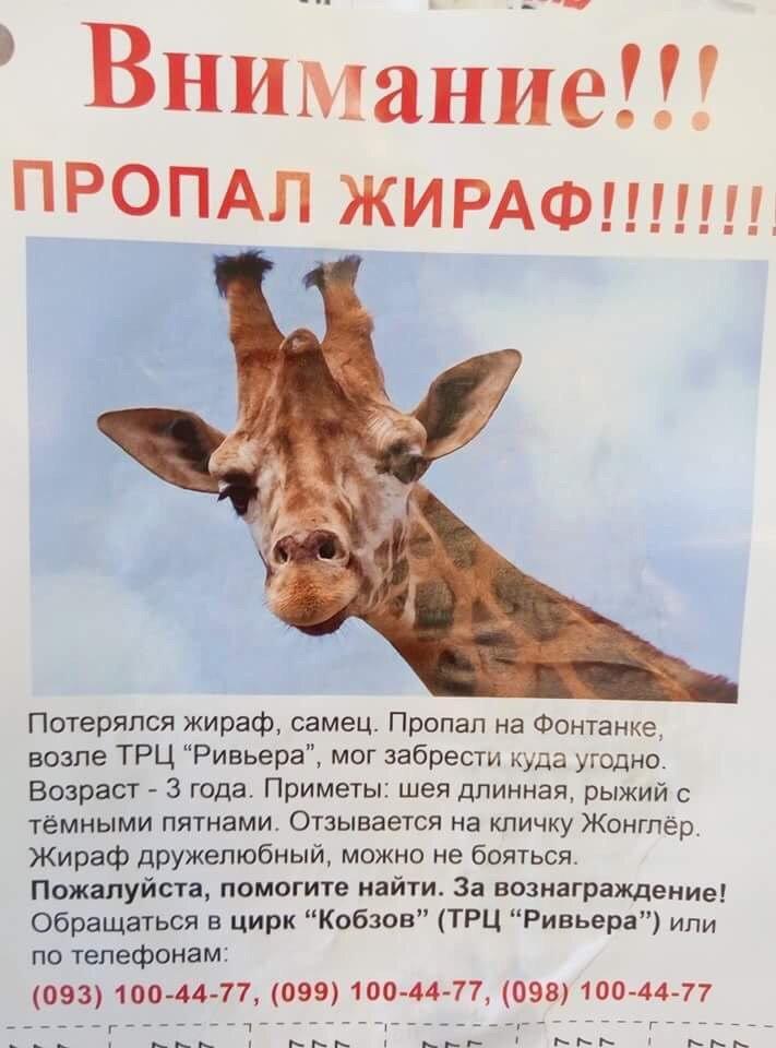 В Одессе появились объявления об исчезновении из цирка жирафа (ФОТО), фото-1