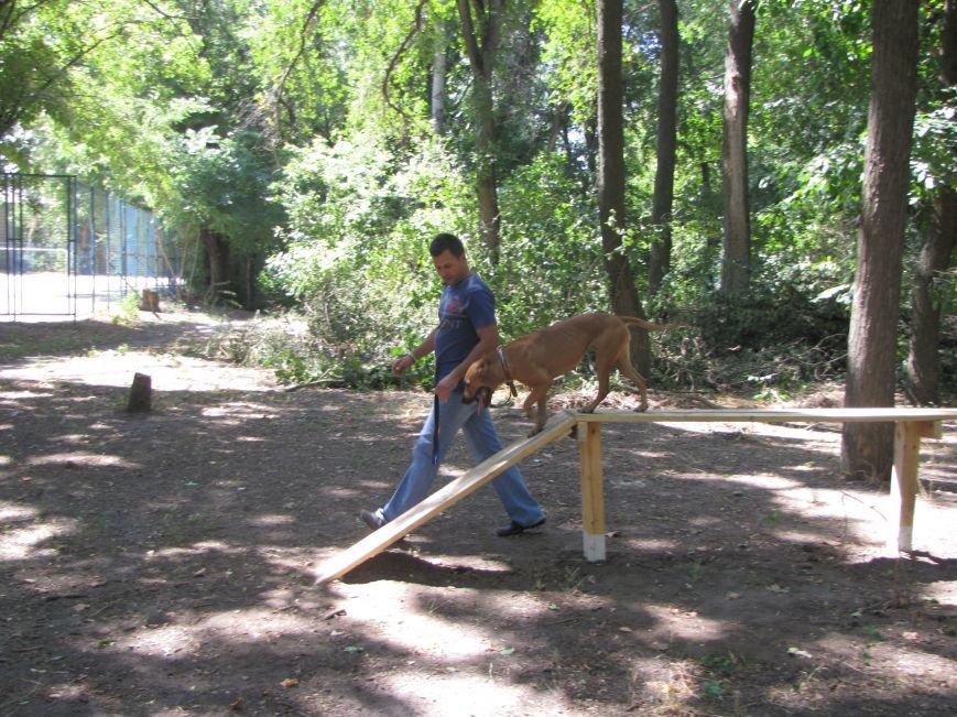 В Мелитополе презентовали первую тренировочную площадку для собак (фото), фото-2
