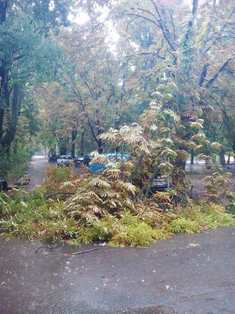 В Одессе небесный потоп повалил деревья (ФОТО), фото-4